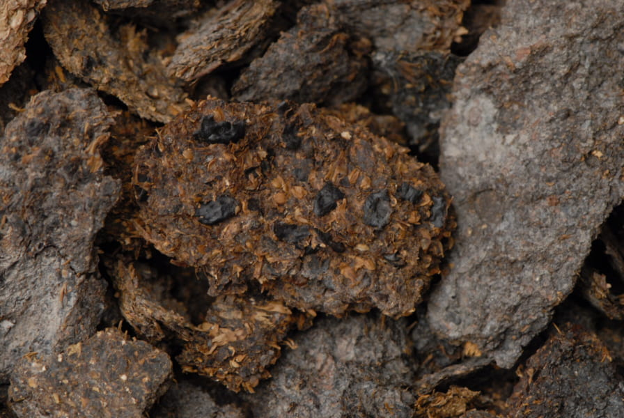 糞便の中に見つかった数々の穀物
