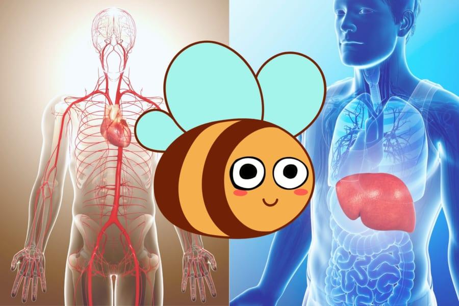「ローヤルゼリー」に動脈硬化予防と肝機能改善効果があると明らかに
