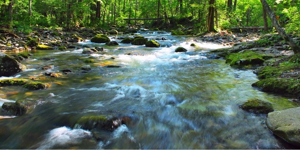 淡水貝が健全な「川のかたち」を維持していた