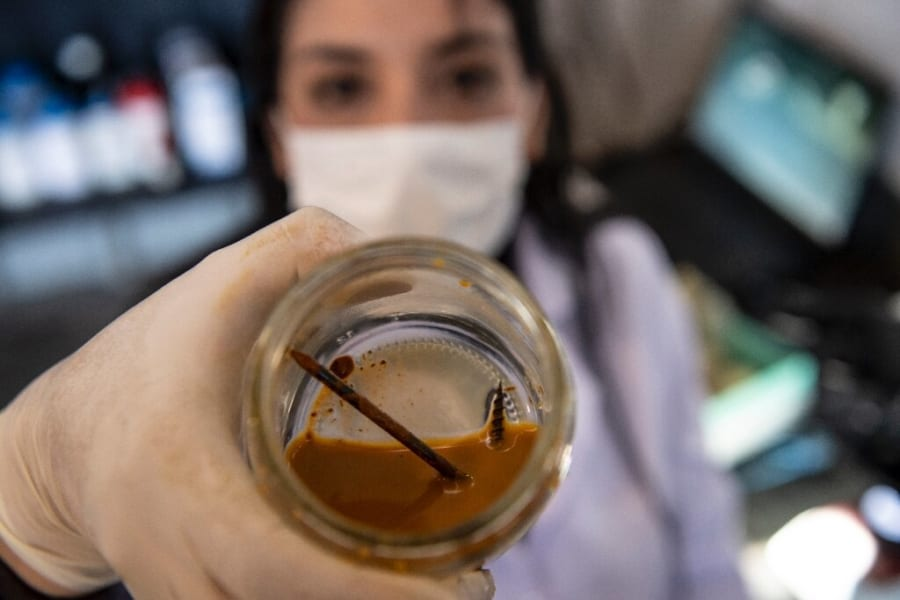 飢餓状態にすると「金属の釘を3日で食べ尽くすバクテリア」が見つかる