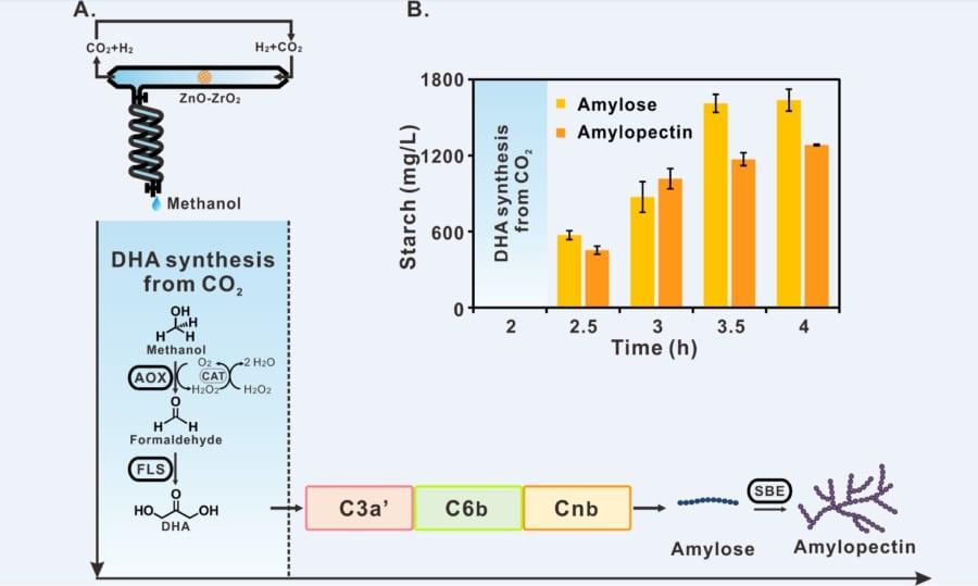 CO2から人工的にデンプンを合成する経路(ASAP)