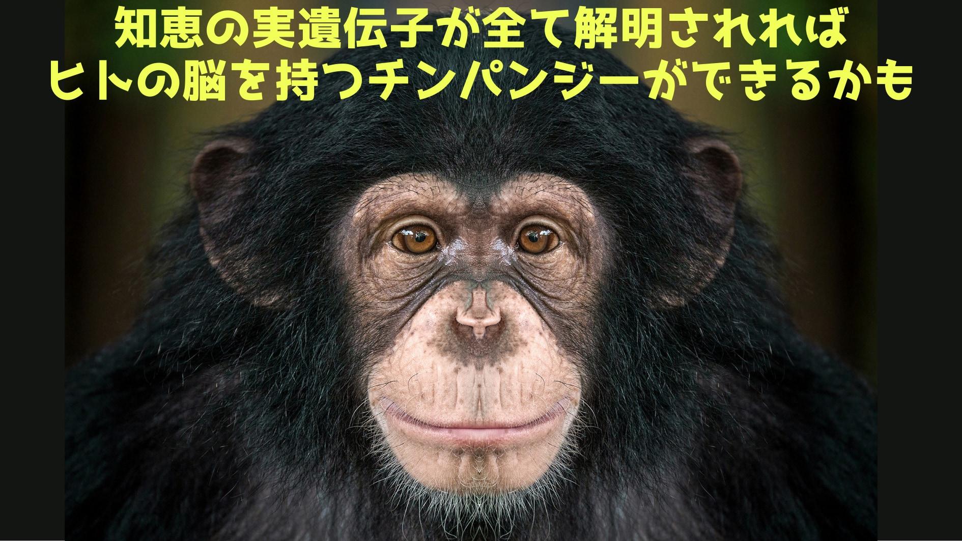 ヒトとサルを別ける「知恵の実遺伝子」がジャンクDNAに埋もれていたと判明!