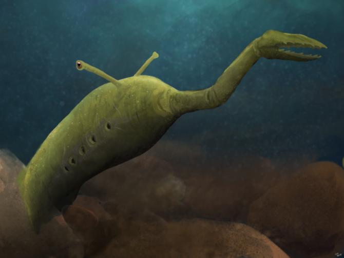 奇怪すぎる形状で研究者を悩ませた海の怪物、タリーモンスターの正体に逆転劇!