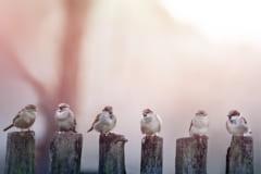 常識だった「鳥のフンが落ちにくいのは尿酸のせい」を覆す新事実が発覚の画像 1/4