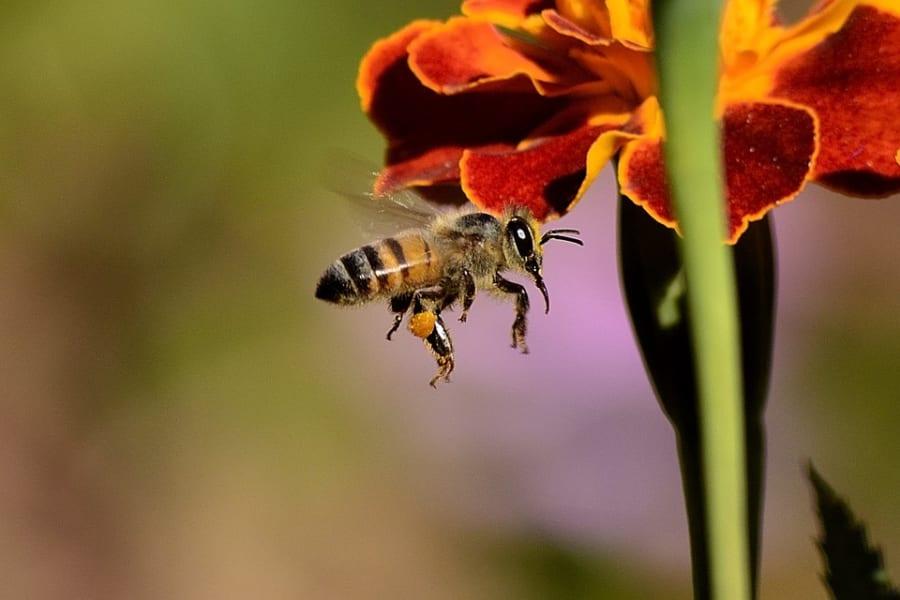 昆虫のシマ模様のひみつ。移動する時に効果が変わる!?