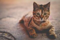 猫の寄生虫が「人間を起業させる」という驚くべき研究が発表されるの画像 2/3