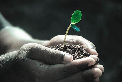 地中のマイクロプラスチックでミミズの体重が減少、農業へ悪影響が?