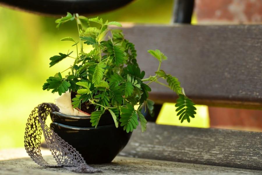 植物に麻酔薬をうった結果・・・