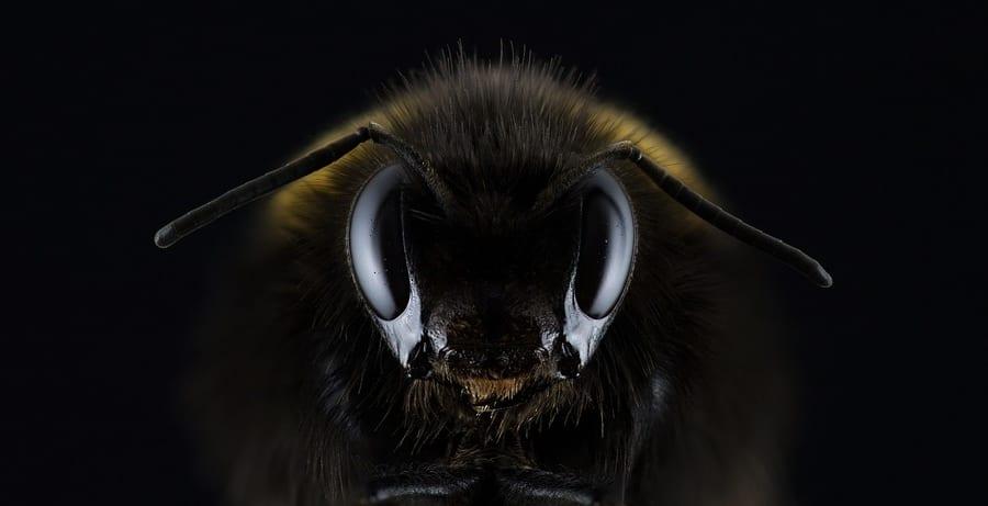 """「昆虫の脳」をAIに活用するプランを米国""""DARPA""""が発表"""