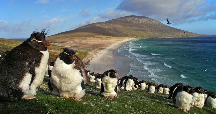 世界のフシギな島10選! 「口笛で会話するトリがいる島」