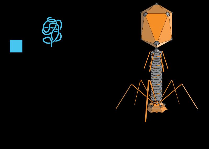 「生物のようなウイルス」と「ウイルスのような生物」が発見され、生物と非生物の境界がゆらぐ