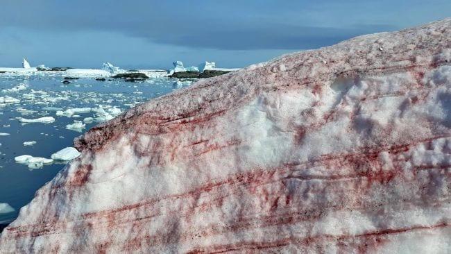 奇妙な「赤い雪」が積もる現象が南極で報告される
