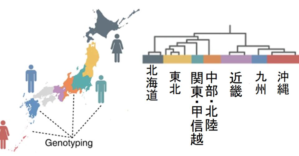 関東人と関西人は遺伝子から違う?日本人は8つの遺伝的グループに分かれているという研究