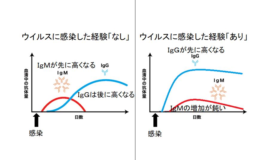 日本人は新型コロナウイルスに対して免疫を持っている可能性 低い死亡率の原因?