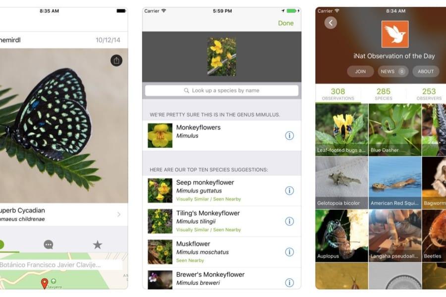 誰でも自然探索!動物や植物の名前を教えてくれるアプリ『iNaturalist』