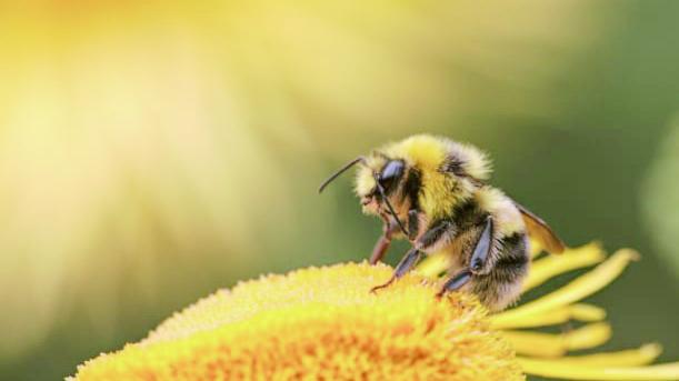 """昆虫の減少に「スマホの電波」が関与か、""""5G""""の導入で地球から昆虫がいなくなる可能性が示される"""