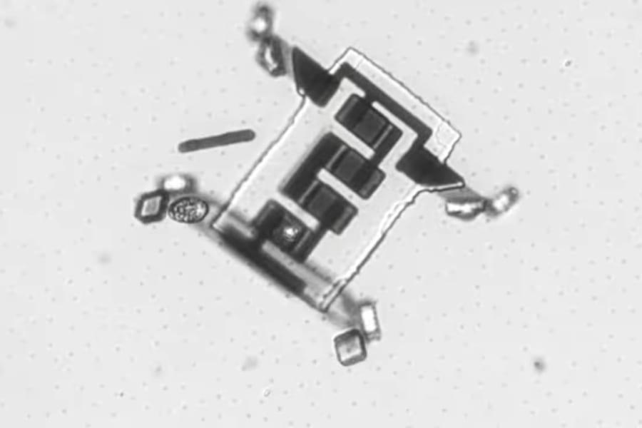"""「4つ足で歩く」毛髪よりも小さいマイクロボットが誕生、足の作りは""""日本の折り紙""""がヒントに"""