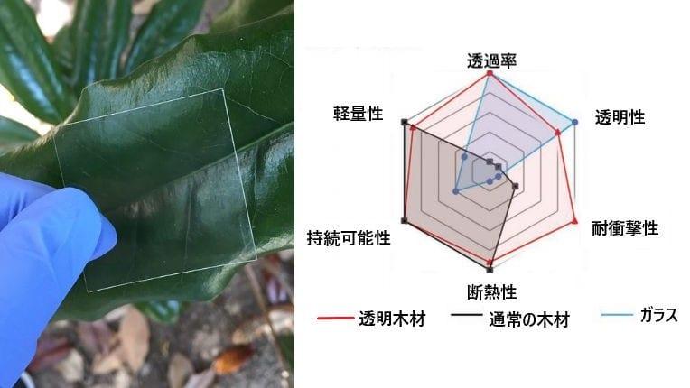 「ガラスのような木材」をつくることに成功!未来の窓は木でできているかも