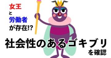 社会性ゴキブリ