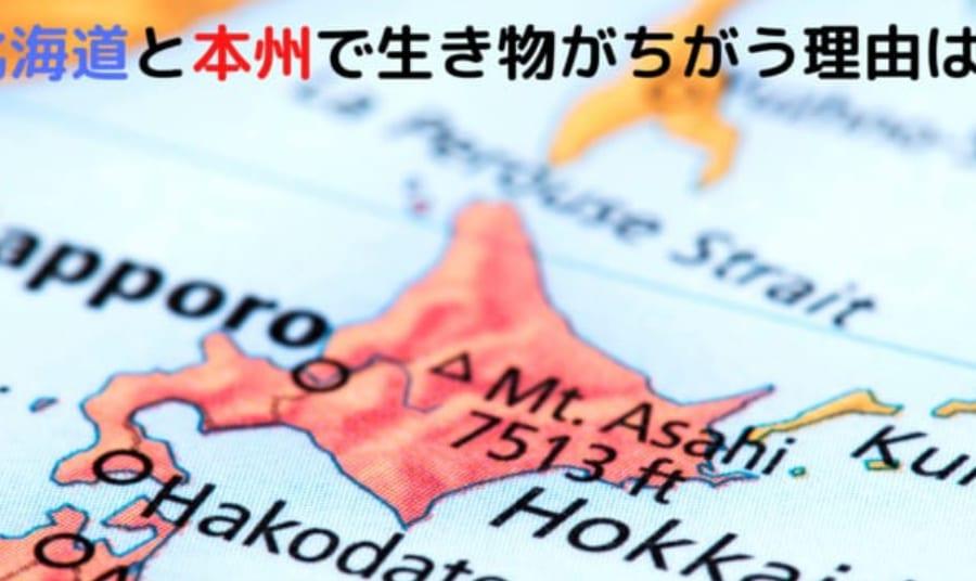 ヒグマは北海道にしかいない。 北海道と本州では生息する動物がちがう理由を知っていますか?