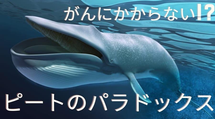 巨大なクジラはがんにならない!? 未解決問題「ピートのパラドックス」が起こる理由とは