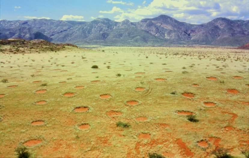 ついに解明! ナミブ砂漠の「フェアリーサークル」を作っていた真犯人が特定される シロアリは冤罪だった?