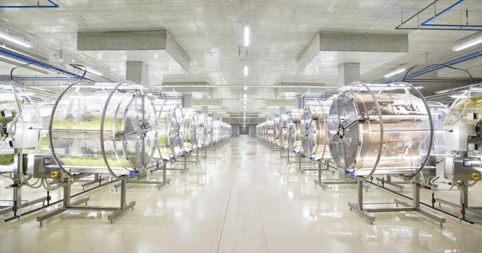 国内最大の「完全人工光植物工場」が完成! コンピュータによる制御でスーパースプラウトを生産