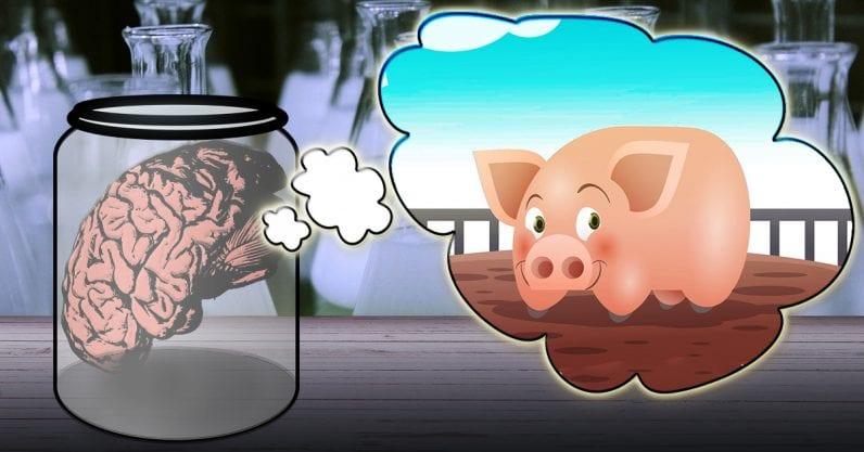 身体から離した豚の脳を36時間「生かす」実験が成功する。意識はあるの?