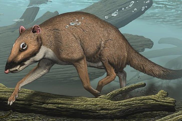 クジラは「シカの仲間」から進化したって知ってる?