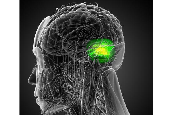 お酒は肝臓だけでなく「脳」でも直接代謝されていた