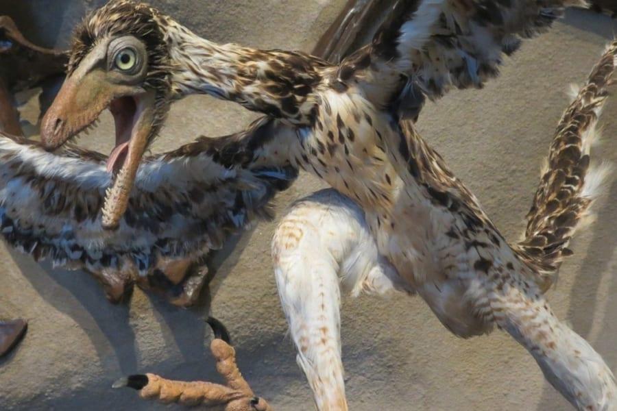 現代に生きる始祖鳥!? 超ユニークな鳥ツメバケイ【ヘンテコ生き物図鑑】