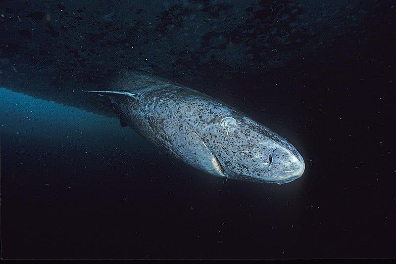 最も長寿な生き物はどれ?「不老不死」を手に入れてしまった生物とは
