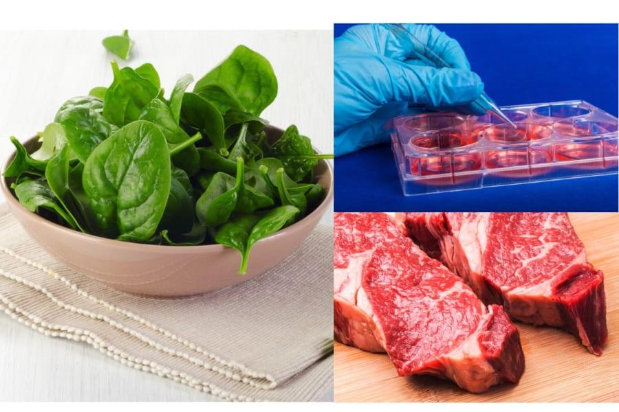 ほうれん草の葉脈から「人工牛肉」を作ることに成功 厚切り人工ステーキが作れる?