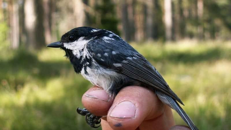 鳥は寒くなるほど血液で熱を生産していた 「鳥が寒さに強い秘密」を解明