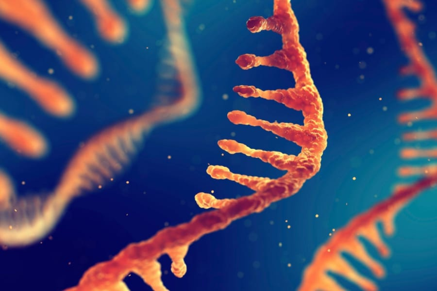 人間は「セントラルドグマ」を逆行できる可能性があると明らかに! RNAからDNAを作ることに成功