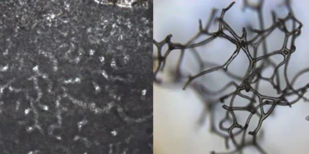 8億9000年前、酸素が少ない時代を生きた「最古の動物化石」を発見か