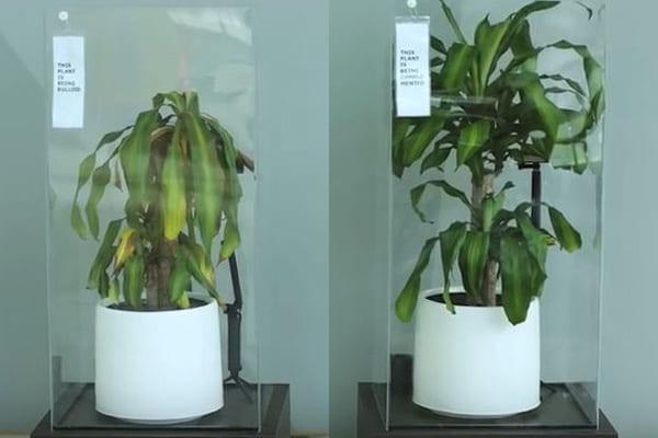 IKEAが実験! 「いじめた植物」と「褒めた植物」で成長の差が歴然