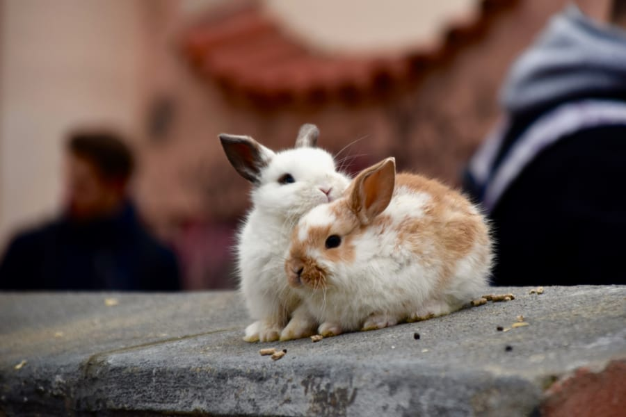 神秘「フィボナッチ数列」とは?|ウサギのつがいの問題と黄金比との関連も解説