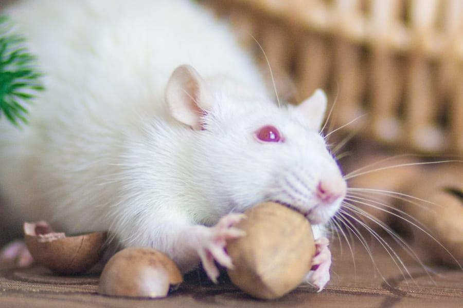 mRNA技術で95%のマウスから「がん細胞を完全消滅」させることに成功!