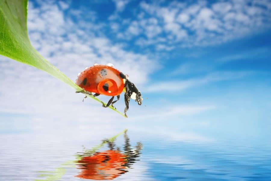 複数のイモムシに水上移動能力があると明らかに