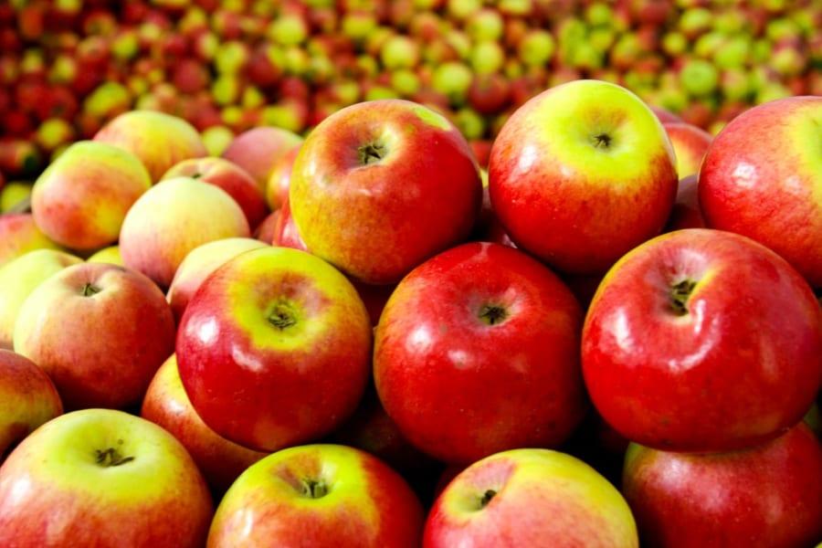 収穫後も熟成する果物としない果物があるのはなぜなのか?