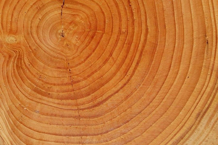 地震は木の成長速度を変化させると明らかに